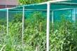 Green Shade Netting 1m x 50m, 40%