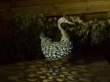 Metal Silhouette Duck Garden Light