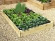 Slim Raised Garden Beds Tanalised - 1.2m (4ft) x 2.4m (8ft)